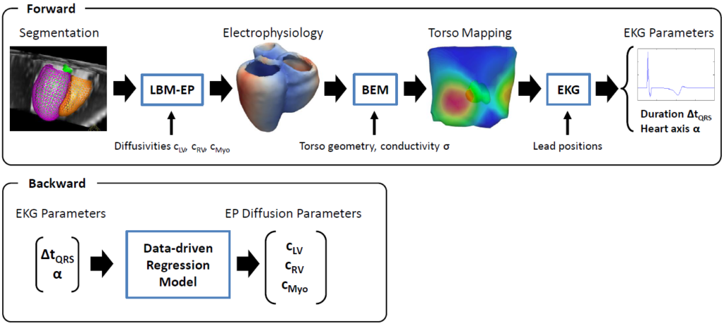 ECG-EP Workflow